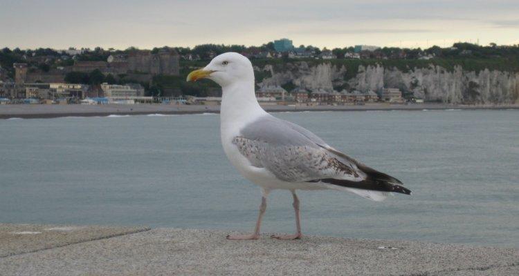 oiseaux dieppe découvrir