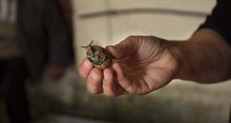 Les escargots de l'Odon, Pays de Vire, Calvados, Normandie