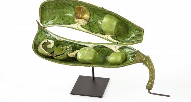 Belles plantes ! Les modèles en papier mâché du Dr Auzoux- Pois de senteur