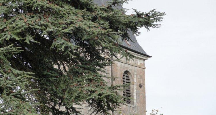 Derrière le cèdre du Liban, l'église de Gy