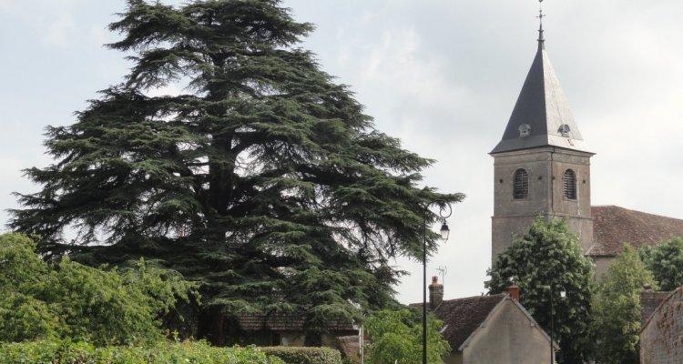 L'église derrière ce cèdre du Liban de plus de 200 ans
