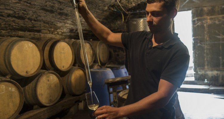 Mathieu Colin, Le Vignoble du Moutherot