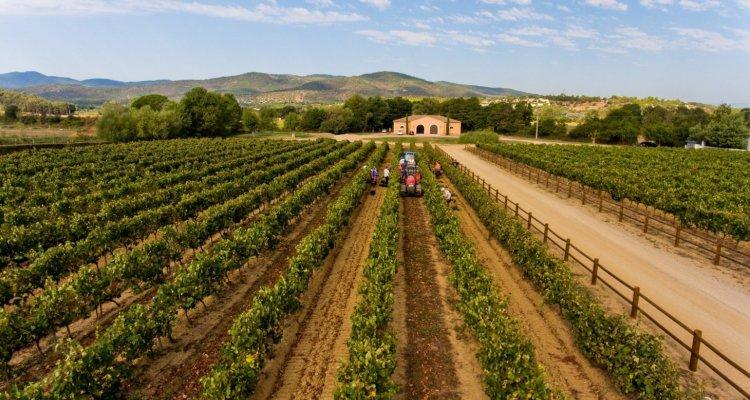 rosé vin chateau vaudois var roquebrune visite dégustation oenotourisme cote de provence vendange