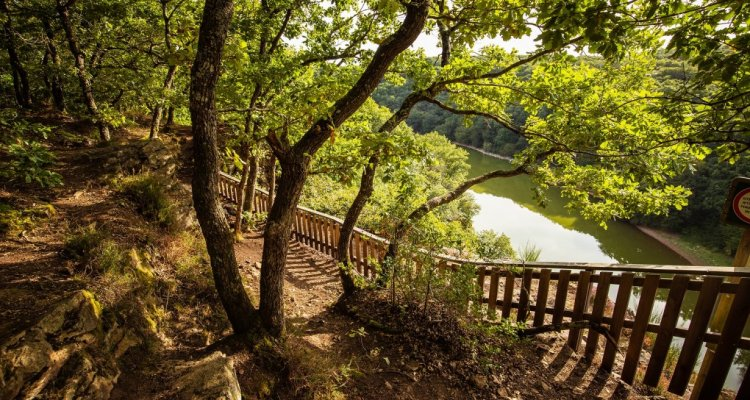 Forêt de Mervent - 85200
