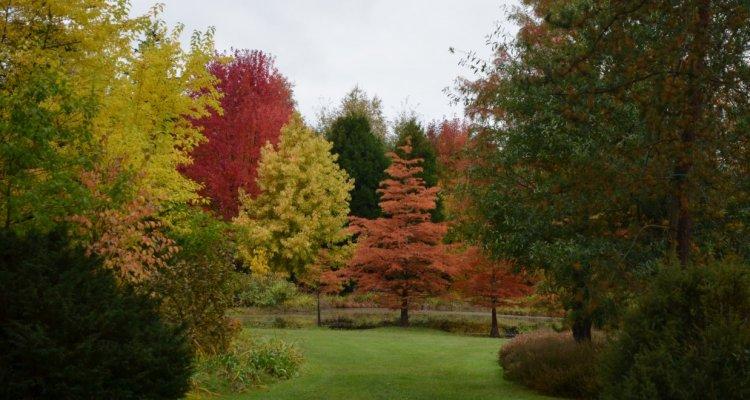 Arboretum Américain en automne