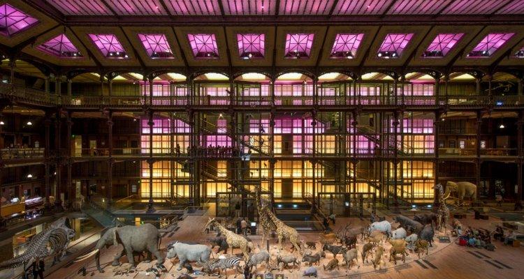 La Grande Galerie de l'Evolution - Paris