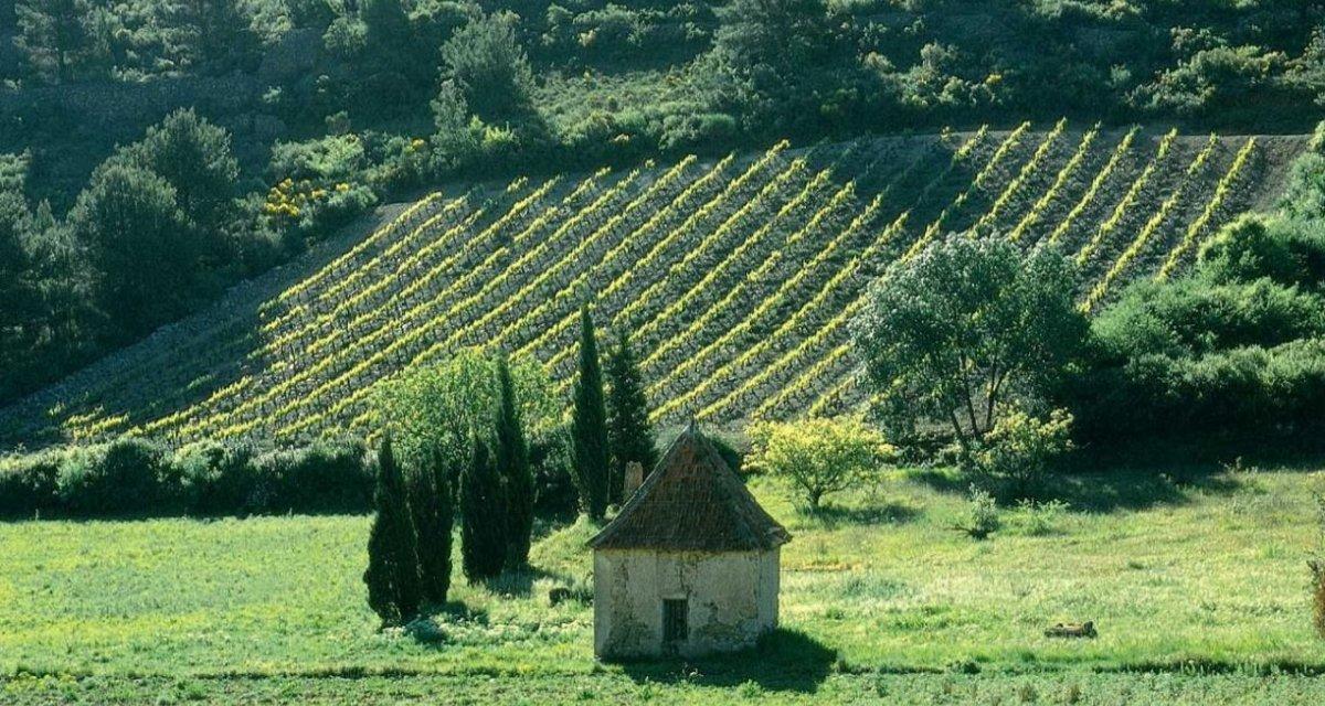 Vignes de saint-chinian