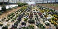 Serre de fleurs comestibles