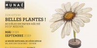 Belles plantes ! Les modèles en papier mâché du Dr Auzoux-