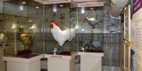 Expo musée de la bresse