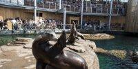 Réserve des Lions de Mer Nausicaa