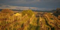 Vignes Château de Montpezat