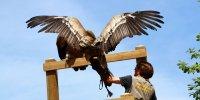 Spectacle oiseaux vautour parc argonne découverte