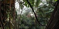 Les grandes Serres du Jardin des Plantes - Paris