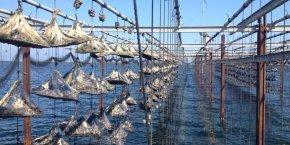 Tarbouriech thau huîtres
