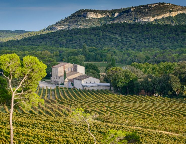 Château La Roque dans l'appellation Pic Saint-Loup