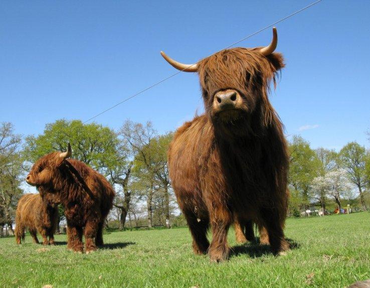 La Ferme du Monde Highland