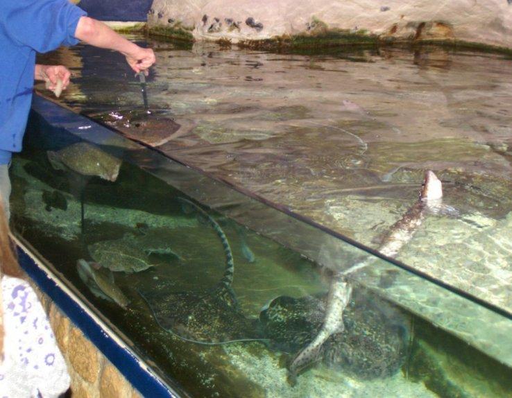 les aquariums de l'ESTRAN Cité de la Mer