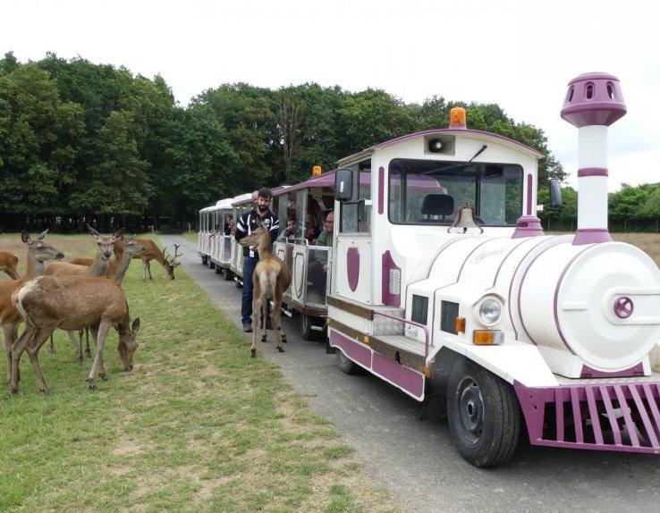 Cerfs Safari Train - Réserve de Beaumarchais