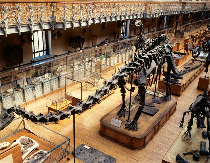 La Galerie de Paléontologie - Paris